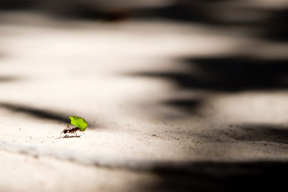 ant carrying a leaf strong